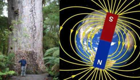 Сдвиг полюсов происходит каждые 700 лет.