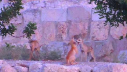 На Храмовой Горе произошло новое знамение.