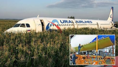 Жесткая посадка А321 в Жуковском: в Москве появились 5-ти килограммовые чайки?