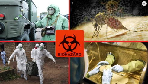 ВНИМАНИЕ: в мире появились очень опасные комары!