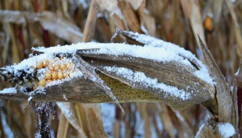 К глобальному голоду пора начинать готовиться: экспорта продовольствия в мире почти не будет.